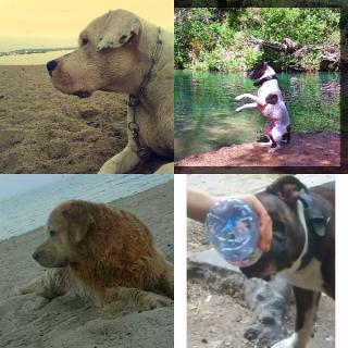 Les conseils de votre vétérinaire  pour les grosses chaleurs de l'été ou en cas de canicule