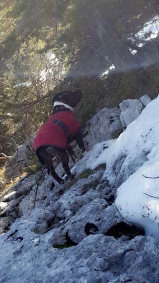 L'hiver va faire son entrée,  voici quelques conseils afin que votre chien ou votre chat passe un hiver paisible :